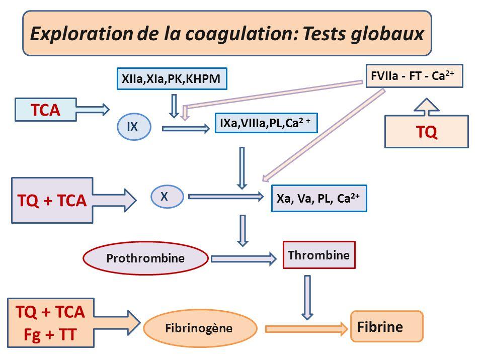Exploration de la coagulation: Tests globaux Fibrine XIIa,XIa,PK,KHPM FVIIa - FT - Ca 2+ IXa,VIIIa,PL,Ca 2 + Xa, Va, PL, Ca 2+ Thrombine Prothrombine Fibrinogène X IX TCA TQ TQ + TCA Fg + TT