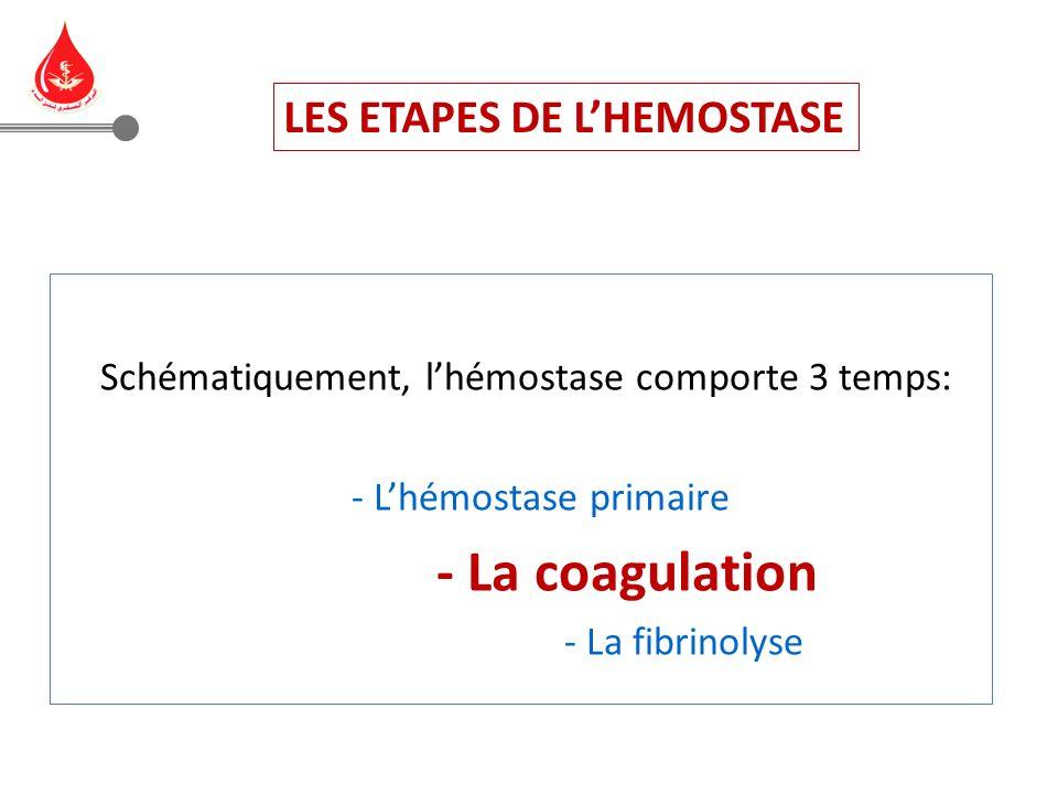 Hémostase primaire: interactions plaquettes-vaisseaux: Clou plaquettaire ou thrombus blanc Coagulation : transformation du fibrinogène en fibrine: Caillot de fibrine ou thrombus rouge Fibrinolyse: transformation du plasminogène en plasmine: Disparition du caillot et cicatrisation des vaisseaux