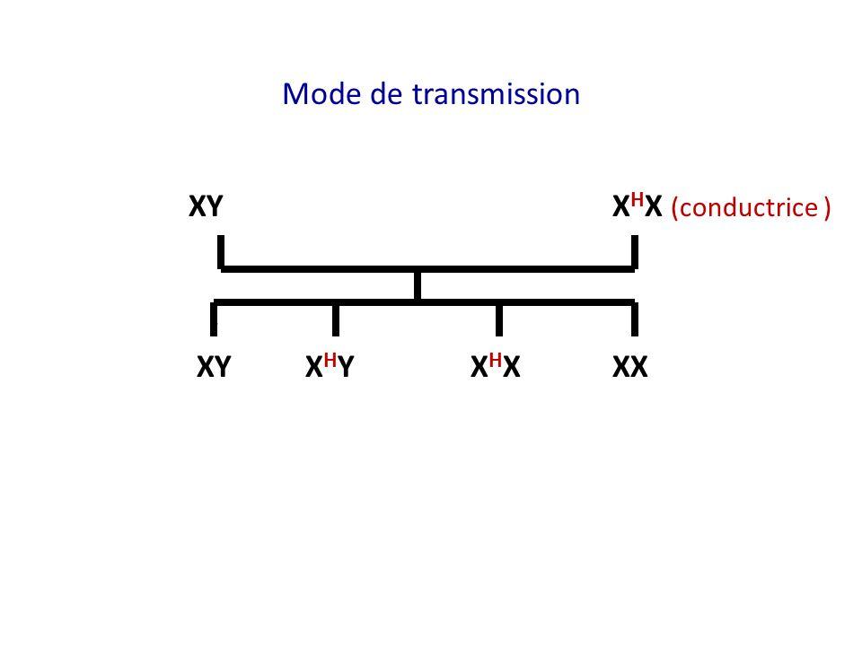 Mode de transmission XY X H X (conductrice ) XY X H Y X H XXX