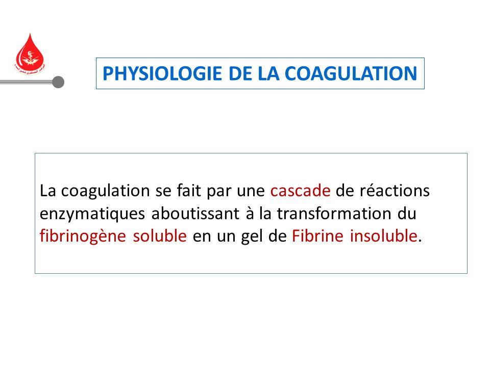 La coagulation se fait par une cascade de réactions enzymatiques aboutissant à la transformation du fibrinogène soluble en un gel de Fibrine insoluble.