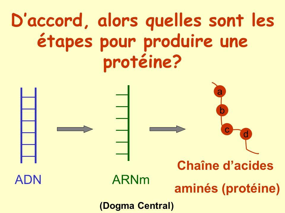 Appariement en pairs A/T ou C/G A C G T A C G G A T C A C C T A G T C LADN (acide désoxyribonucléique) T G C A T G C C T A G T G G A T C A G APPARIEMENT DES BASES: A = Adénine T = Thymine C = CytosineG = Guanine Triplet noyau cytoplasme Situé dans le noyau, lADN constitue le matériel génétique Double hélice dADN