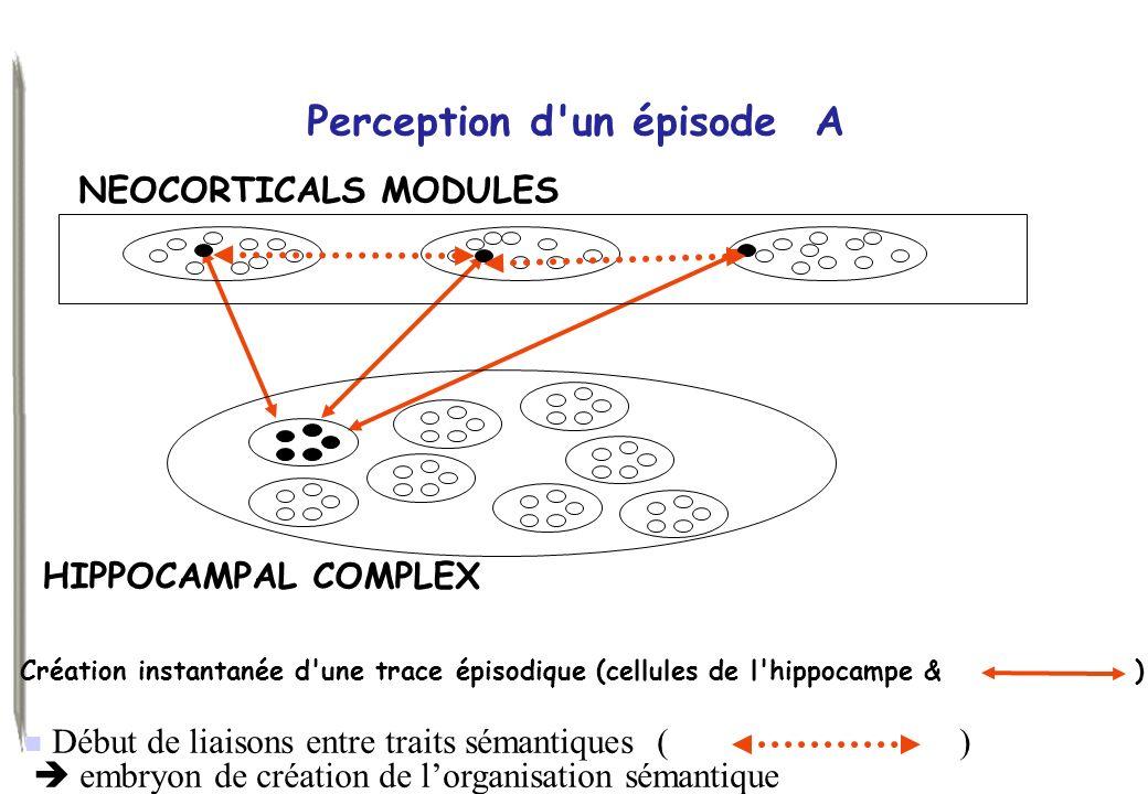 Début de liaisons entre traits sémantiques ( ) embryon de création de lorganisation sémantique Perception d'un épisode A Création instantanée d'une tr