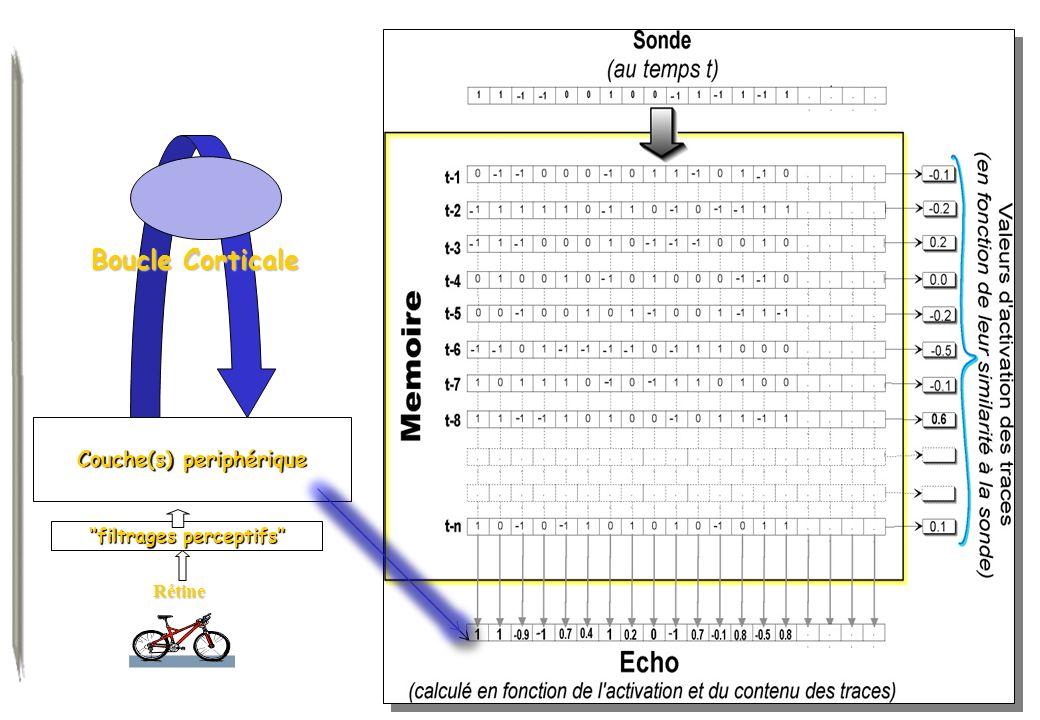 Couche(s) periphérique Boucle Corticale filtrages perceptifs Rétine