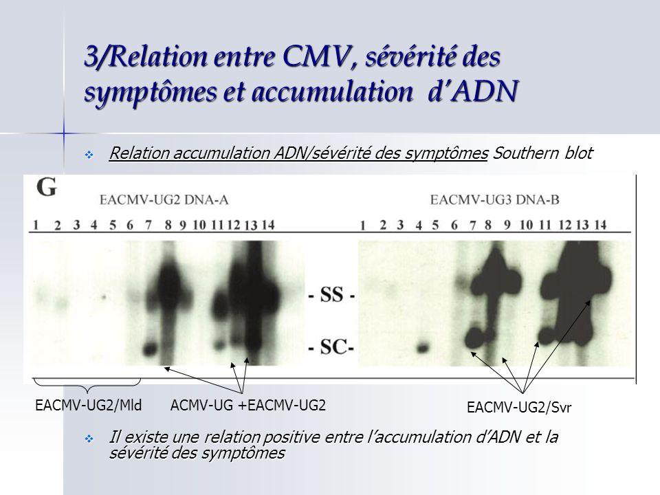 3/Relation entre CMV, sévérité des symptômes et accumulation dADN Relation accumulation ADN/sévérité des symptômes Southern blot Relation accumulation