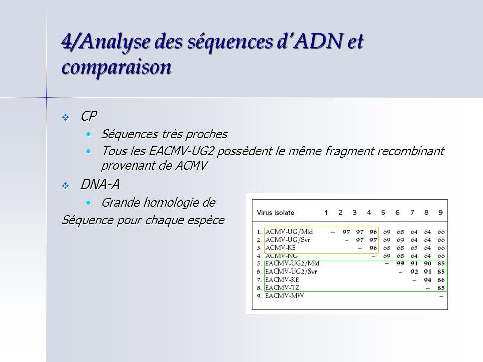 4/Analyse des séquences dADN et comparaison CP CP Séquences très prochesSéquences très proches Tous les EACMV-UG2 possèdent le même fragment recombina