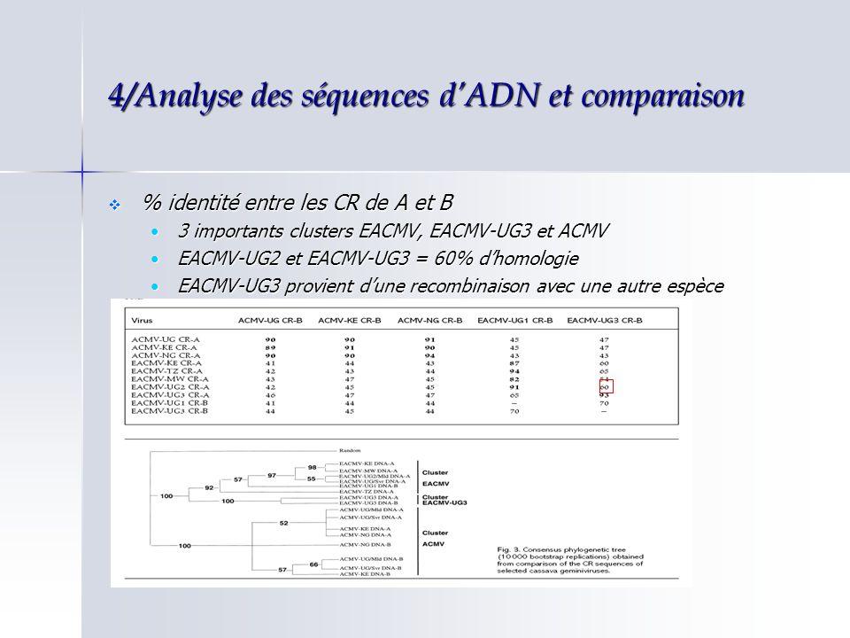 4/Analyse des séquences dADN et comparaison % identité entre les CR de A et B % identité entre les CR de A et B 3 importants clusters EACMV, EACMV-UG3