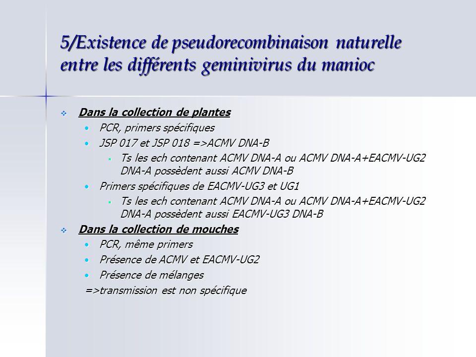 5/Existence de pseudorecombinaison naturelle entre les différents geminivirus du manioc Dans la collection de plantes Dans la collection de plantes PC