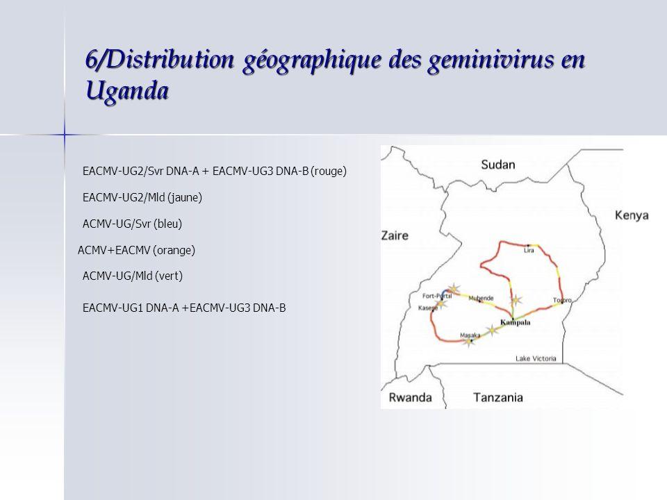 6/Distribution géographique des geminivirus en Uganda Région centrale et nord est Région centrale et nord est EACMV-UG2 A et EACMV-UG3 BEACMV-UG2 A et