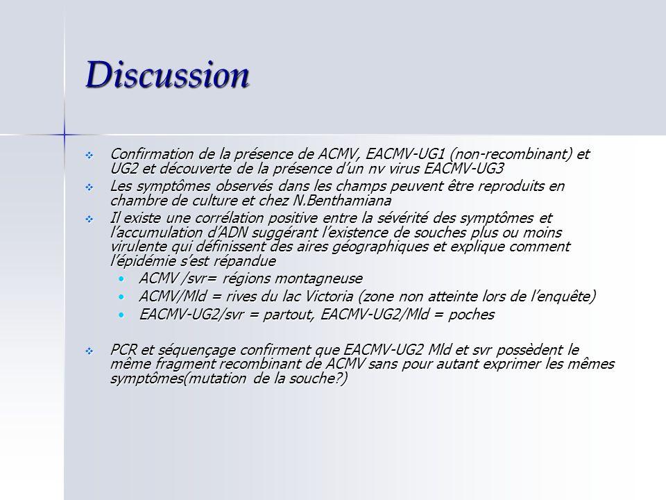 Discussion Confirmation de la présence de ACMV, EACMV-UG1 (non-recombinant) et UG2 et découverte de la présence dun nv virus EACMV-UG3 Confirmation de