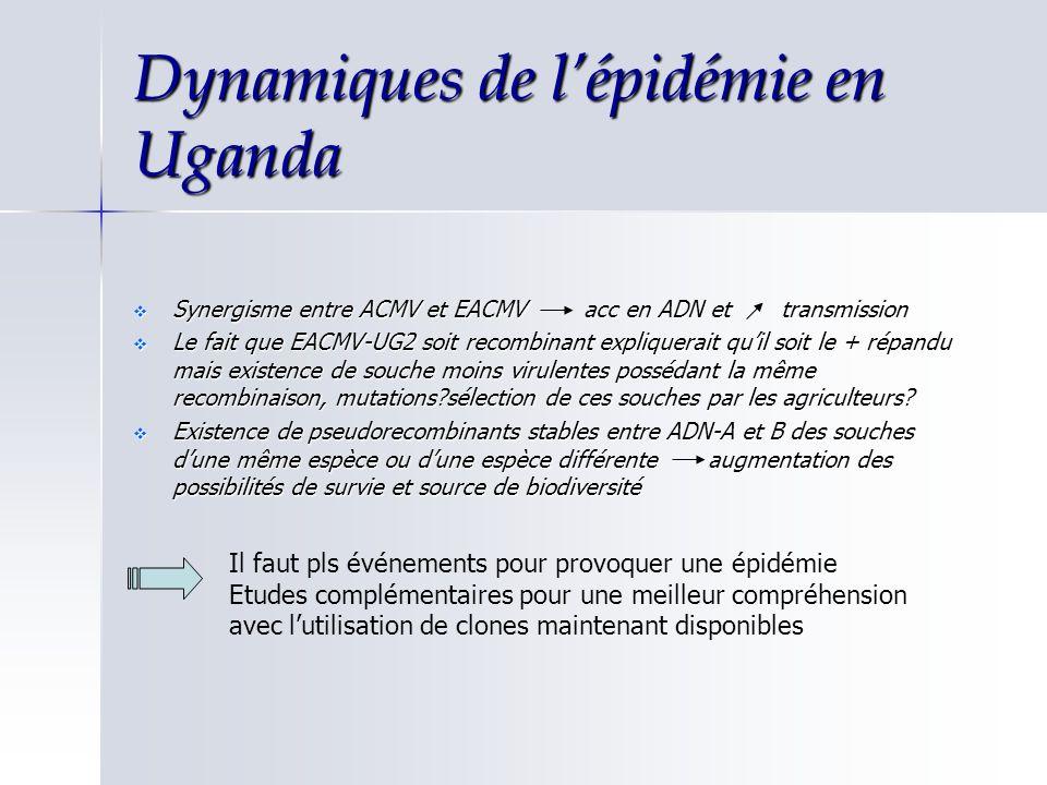 Dynamiques de lépidémie en Uganda Synergisme entre ACMV et EACMV acc en ADN et transmission Synergisme entre ACMV et EACMV acc en ADN et transmission