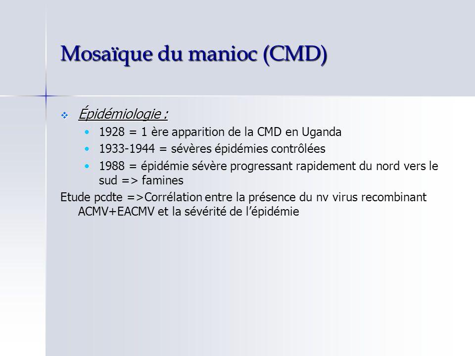 Mosaïque du manioc (CMD) Épidémiologie : Épidémiologie : 1928 = 1 ère apparition de la CMD en Uganda 1933-1944 = sévères épidémies contrôlées 1988 = é