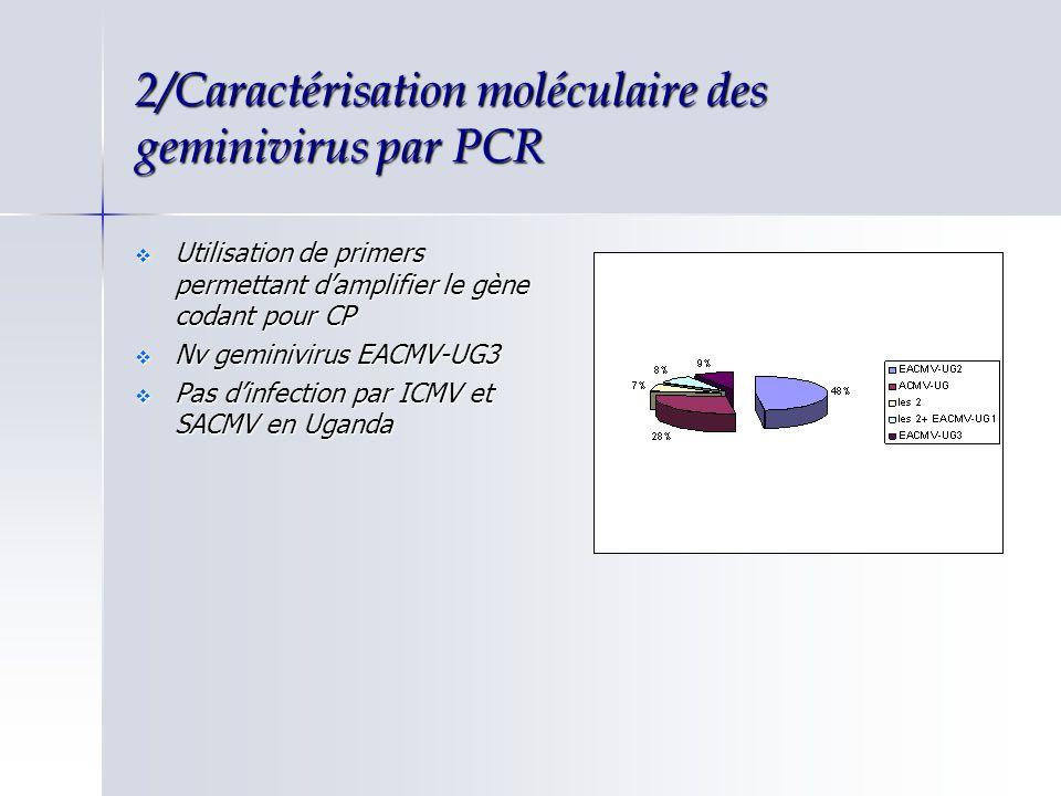 3/Relation entre CMV, sévérité des symptômes et accumulation dADN Relation CMV/sévérité des symptômes Relation CMV/sévérité des symptômes Action synergique entre les 2 espèces de virusAction synergique entre les 2 espèces de virus Sélection du cultivar Ebwanatereka pour la suite de létudeSélection du cultivar Ebwanatereka pour la suite de létude Reproduction des symptômes chez N.benthamiana Reproduction des symptômes chez N.benthamiana Extraction de sève puis inoculation à concentrations, contrôlée par PCRExtraction de sève puis inoculation à concentrations, contrôlée par PCR Selon le virus EACMV-UG2 et ACMV-UG, sévérité des symptômesSelon le virus EACMV-UG2 et ACMV-UG, sévérité des symptômes