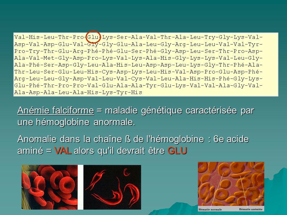 Anémie falciforme = maladie génétique caractérisée par une hémoglobine anormale. Anomalie dans la chaîne ß de l'hémoglobine : 6e acide aminé = VAL alo