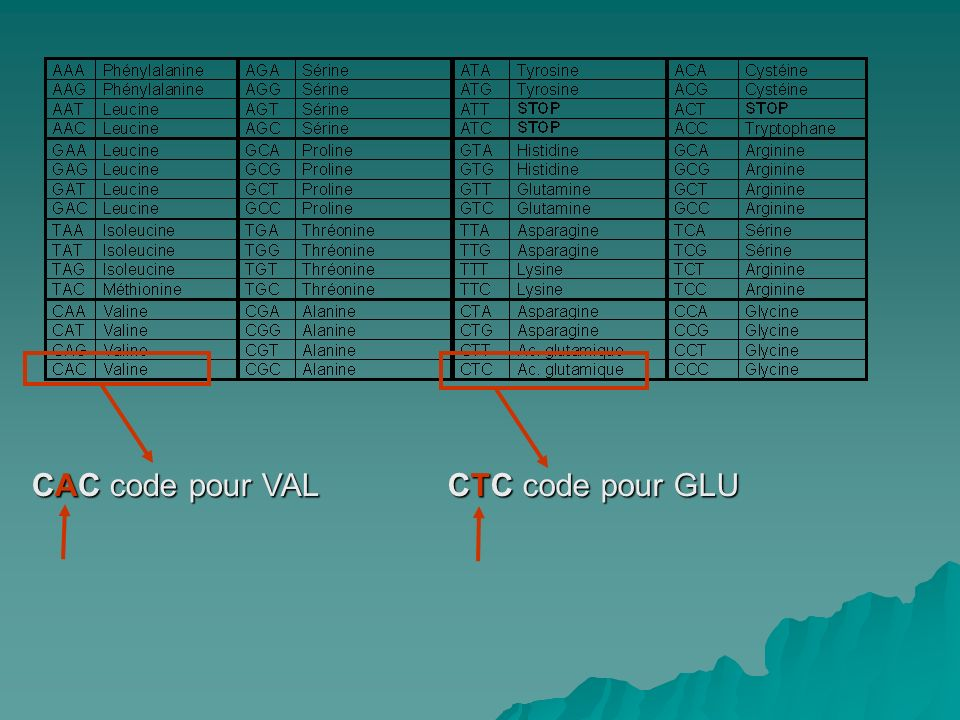 CTC code pour GLU CAC code pour VAL