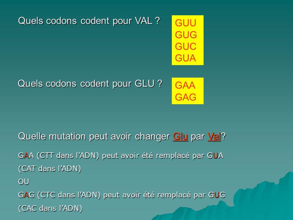 Quels codons codent pour VAL ? Quels codons codent pour GLU ? GUU GUG GUC GUA GAA GAG Quelle mutation peut avoir changer Glu par Val? GAA (CTT dans lA
