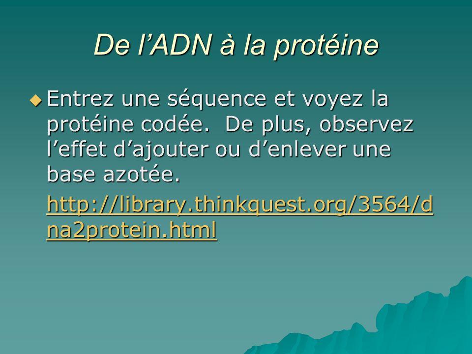 De lADN à la protéine Entrez une séquence et voyez la protéine codée. De plus, observez leffet dajouter ou denlever une base azotée. Entrez une séquen
