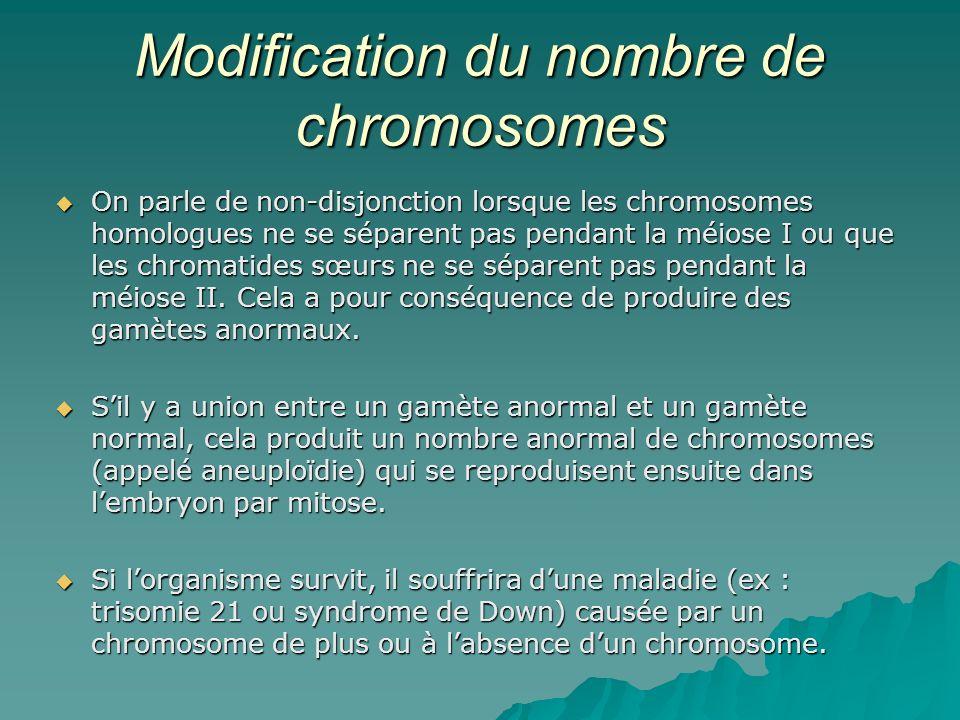Modification du nombre de chromosomes On parle de non-disjonction lorsque les chromosomes homologues ne se séparent pas pendant la méiose I ou que les