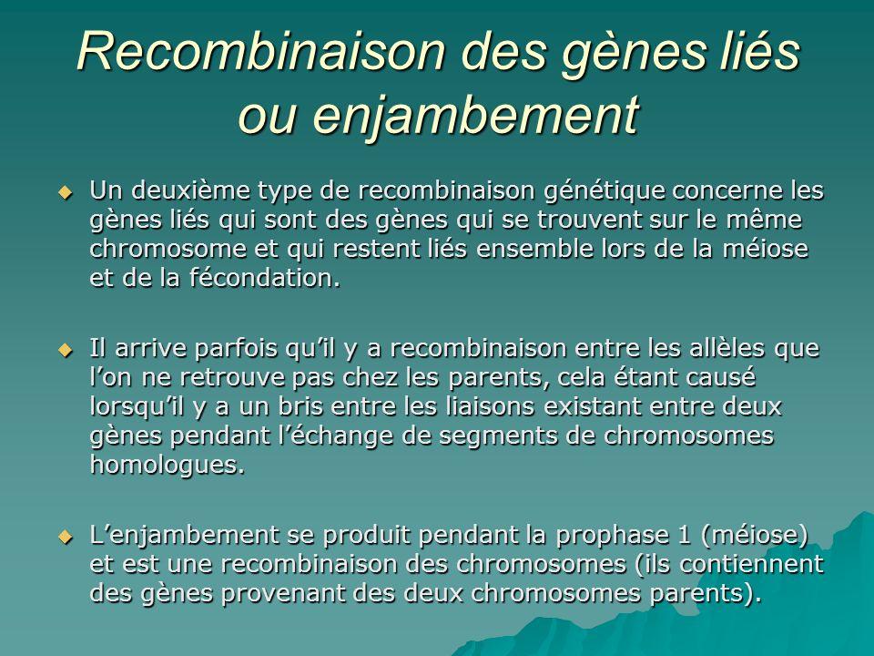 Recombinaison des gènes liés ou enjambement Un deuxième type de recombinaison génétique concerne les gènes liés qui sont des gènes qui se trouvent sur
