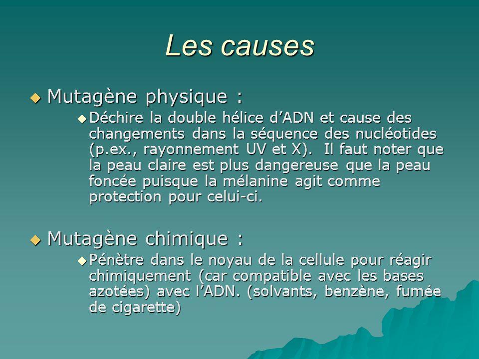 Les causes Mutagène physique : Mutagène physique : Déchire la double hélice dADN et cause des changements dans la séquence des nucléotides (p.ex., ray