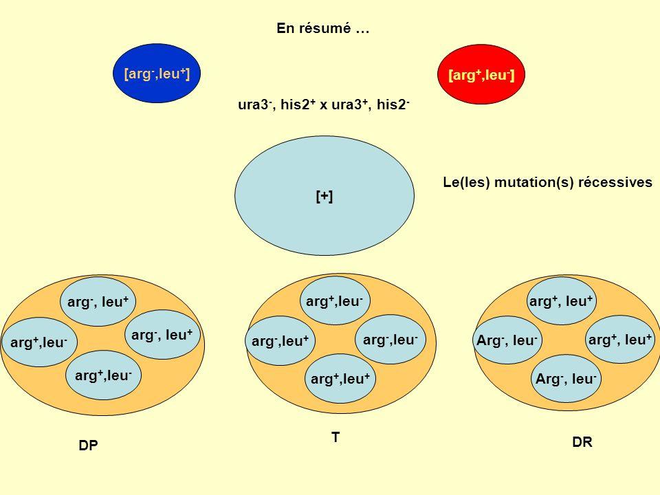 En résumé … ura3 -, his2 + x ura3 +, his2 - [arg -,leu + ] [arg +,leu - ] [+] arg +, leu + Arg -, leu - arg -, leu + arg +,leu - DP arg +,leu - arg -,leu + arg +,leu + arg -,leu - DR T Le(les) mutation(s) récessives arg -, leu + arg +,leu - arg +, leu + Arg -, leu -