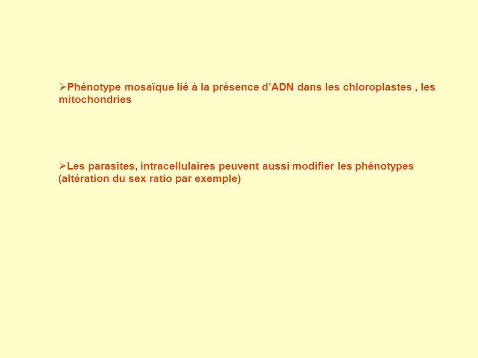 Phénotype mosaïque lié à la présence dADN dans les chloroplastes, les mitochondries Les parasites, intracellulaires peuvent aussi modifier les phénotypes (altération du sex ratio par exemple)