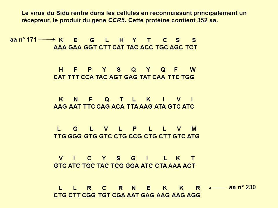 Le virus du Sida rentre dans les cellules en reconnaissant principalement un récepteur, le produit du gène CCR5. Cette protéine contient 352 aa. K E G