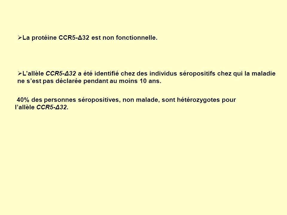 La protéine CCR5-Δ32 est non fonctionnelle. 40% des personnes séropositives, non malade, sont hétérozygotes pour lallèle CCR5-Δ32. Lallèle CCR5-Δ32 a