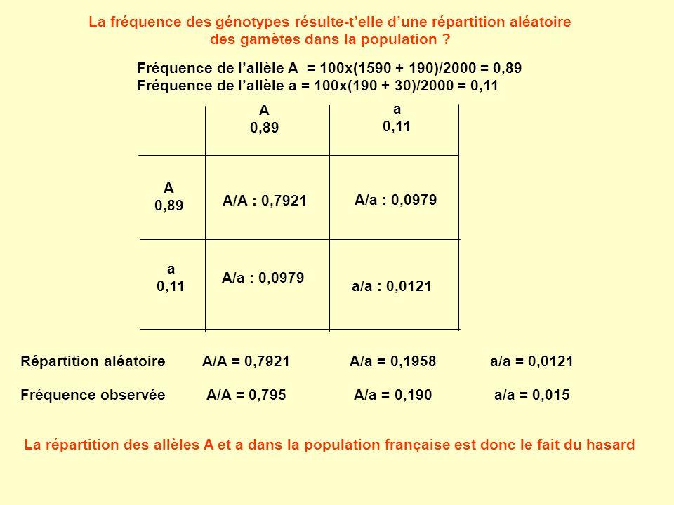 La fréquence des génotypes résulte-telle dune répartition aléatoire des gamètes dans la population ? Fréquence de lallèle A = 100x(1590 + 190)/2000 =