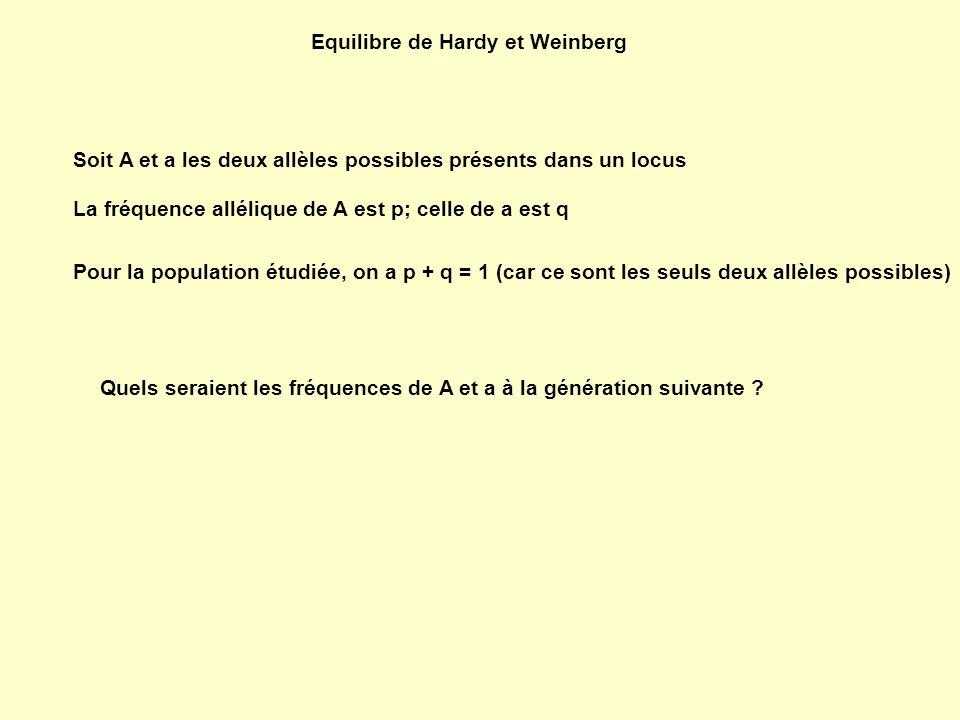 Equilibre de Hardy et Weinberg Soit A et a les deux allèles possibles présents dans un locus La fréquence allélique de A est p; celle de a est q Pour la population étudiée, on a p + q = 1 (car ce sont les seuls deux allèles possibles) Quels seraient les fréquences de A et a à la génération suivante ?