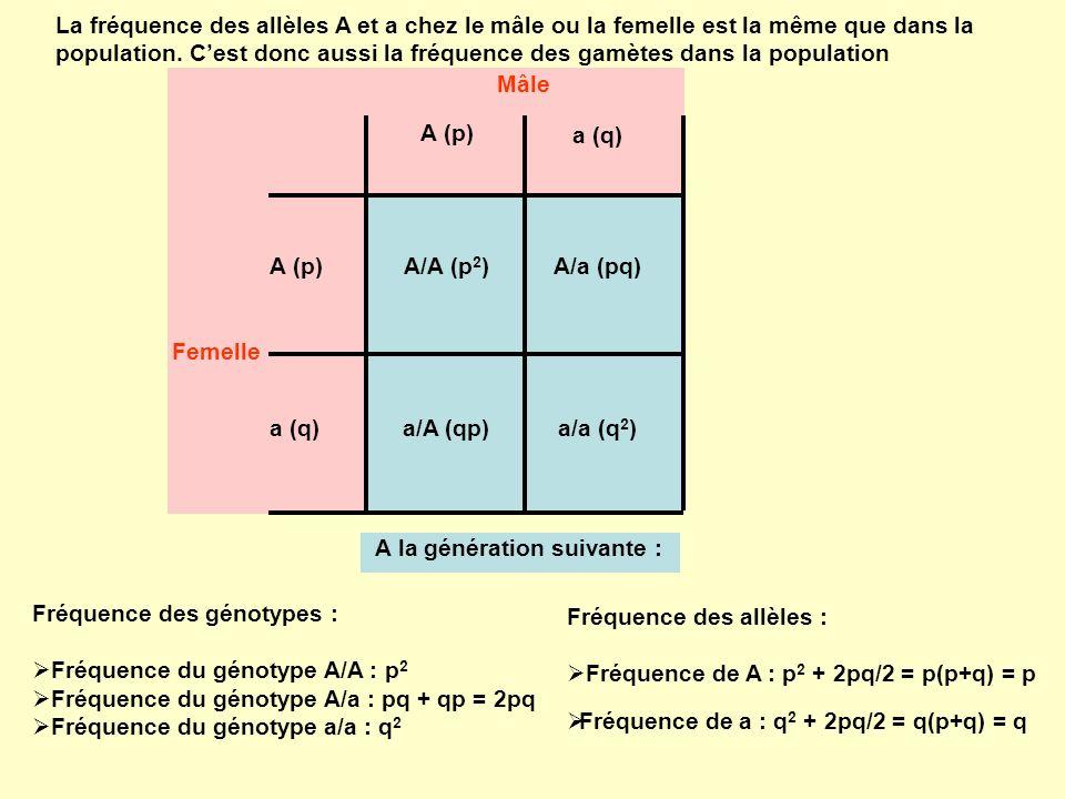 La fréquence des allèles A et a chez le mâle ou la femelle est la même que dans la population.