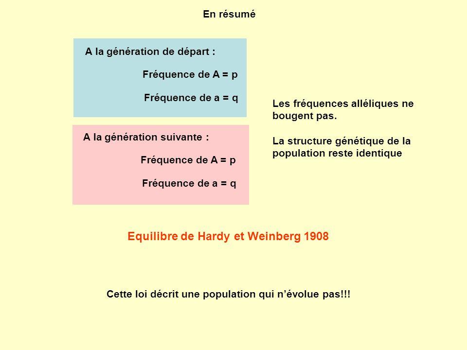 A la génération de départ : Fréquence de A = p Fréquence de a = q A la génération suivante : Fréquence de A = p Fréquence de a = q En résumé Les fréqu