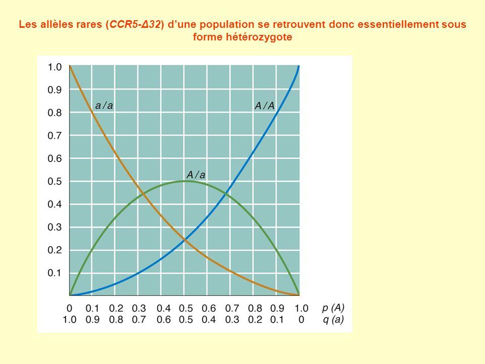 Les allèles rares (CCR5-Δ32) dune population se retrouvent donc essentiellement sous forme hétérozygote