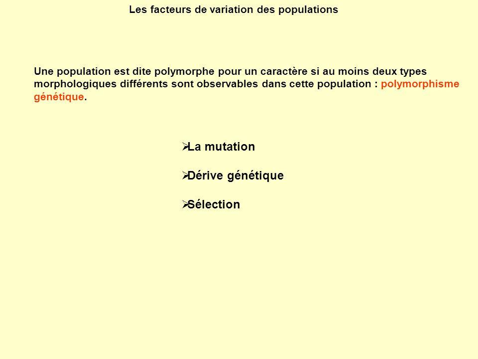 Les facteurs de variation des populations La mutation Dérive génétique Sélection Une population est dite polymorphe pour un caractère si au moins deux