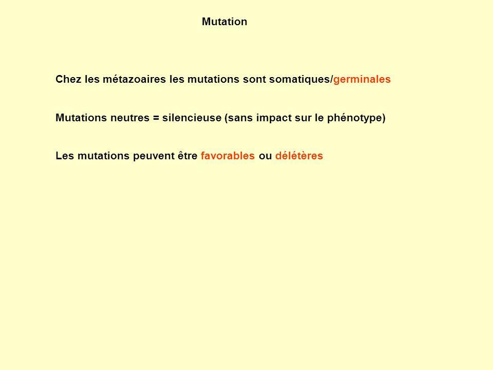 Mutation Chez les métazoaires les mutations sont somatiques/germinales Mutations neutres = silencieuse (sans impact sur le phénotype) Les mutations pe