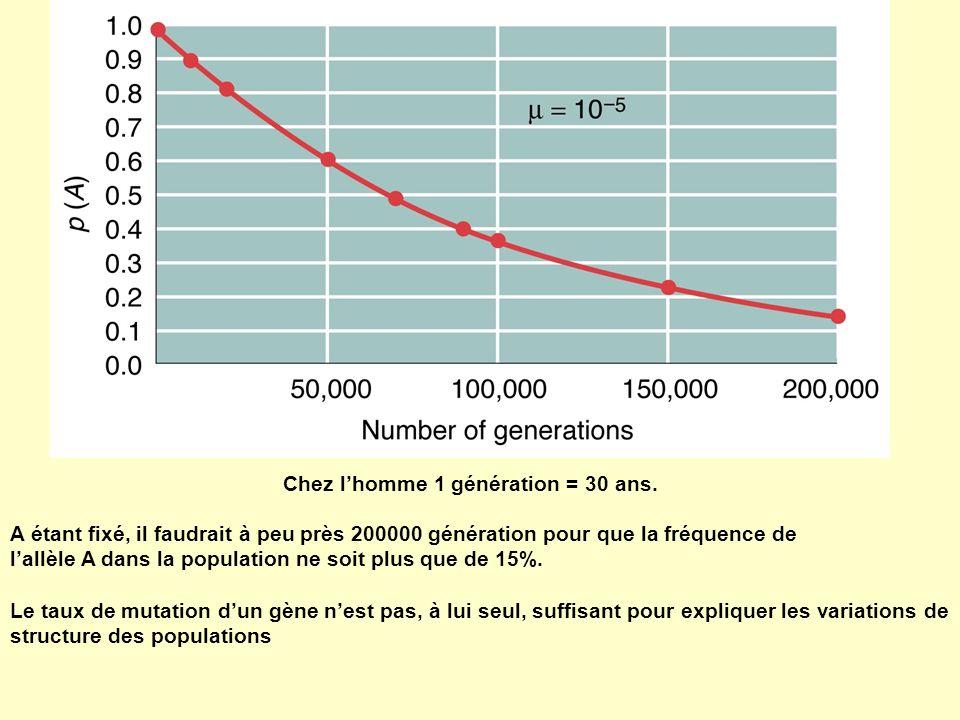 Chez lhomme 1 génération = 30 ans. A étant fixé, il faudrait à peu près 200000 génération pour que la fréquence de lallèle A dans la population ne soi