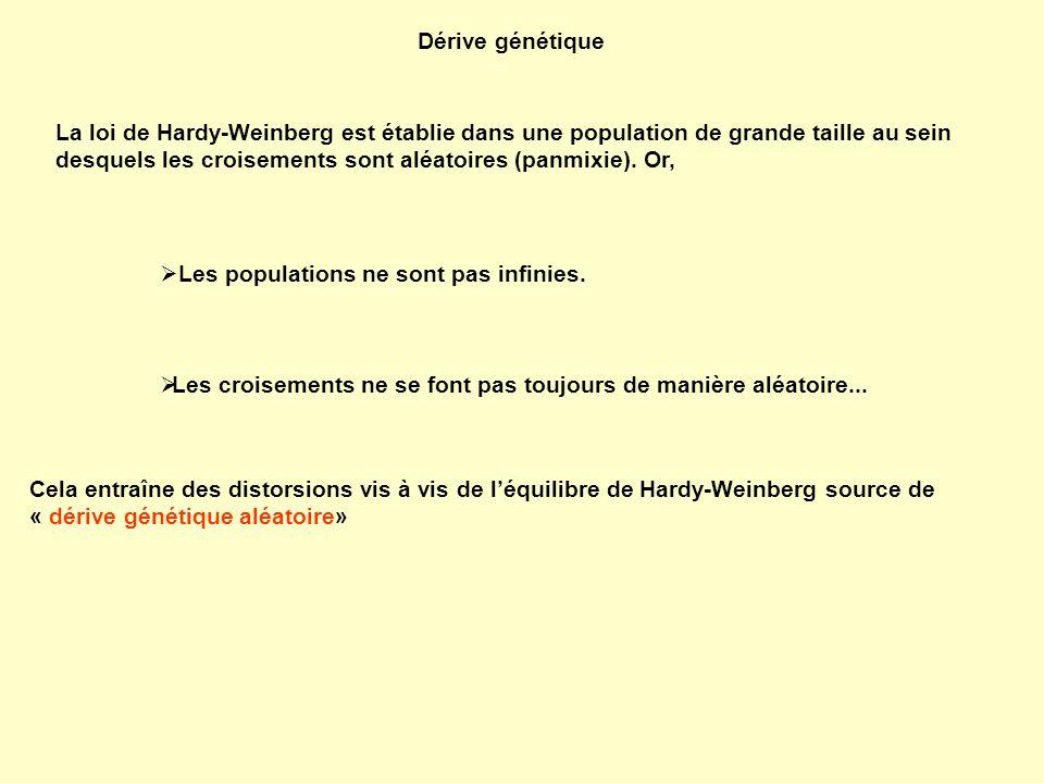 Dérive génétique La loi de Hardy-Weinberg est établie dans une population de grande taille au sein desquels les croisements sont aléatoires (panmixie)