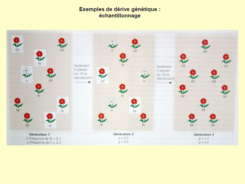 Exemples de dérive génétique : échantillonnage