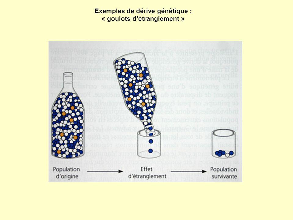 Exemples de dérive génétique : « goulots détranglement »