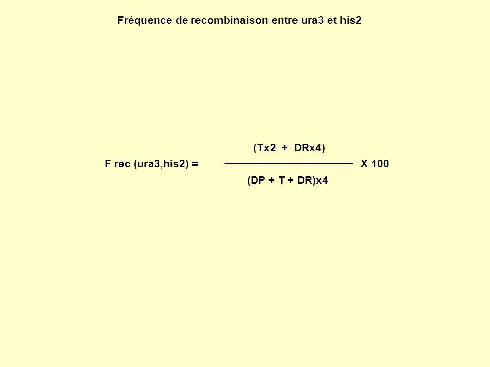 Fréquence de recombinaison entre ura3 et his2 (Tx2 + DRx4) (DP + T + DR)x4 X 100 F rec (ura3,his2) =