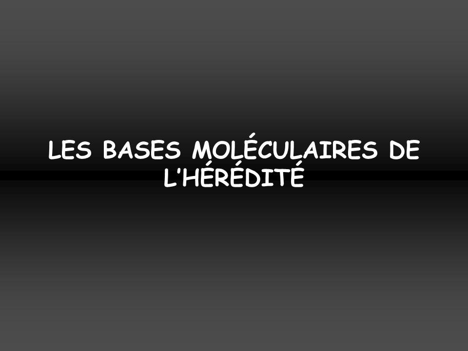 LES BASES MOLÉCULAIRES DE LHÉRÉDITÉ