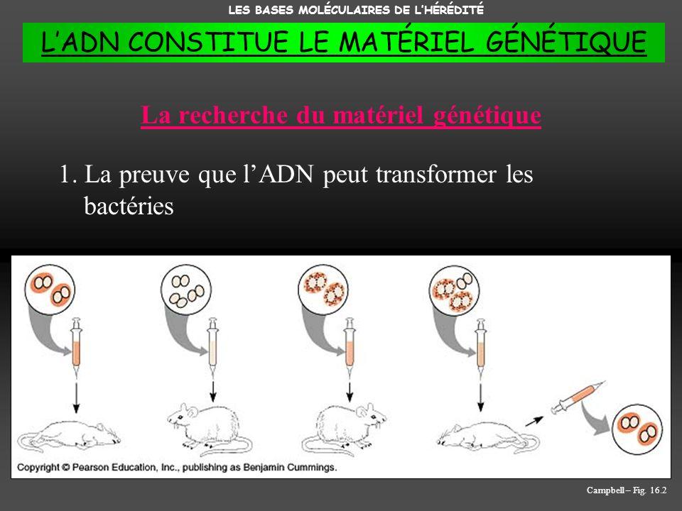La recherche du matériel génétique 1. La preuve que lADN peut transformer les bactéries LES BASES MOLÉCULAIRES DE LHÉRÉDITÉ Campbell – Fig. 16.2 LADN