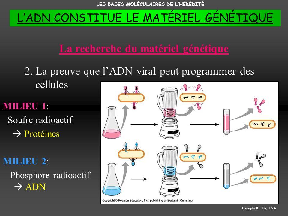 La recherche du matériel génétique 2. La preuve que lADN viral peut programmer des cellules MILIEU 1: Soufre radioactif Protéines MILIEU 2: Phosphore
