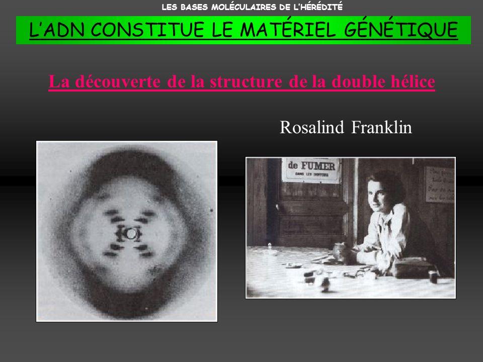 La découverte de la structure de la double hélice Rosalind Franklin LES BASES MOLÉCULAIRES DE LHÉRÉDITÉ LADN CONSTITUE LE MATÉRIEL GÉNÉTIQUE