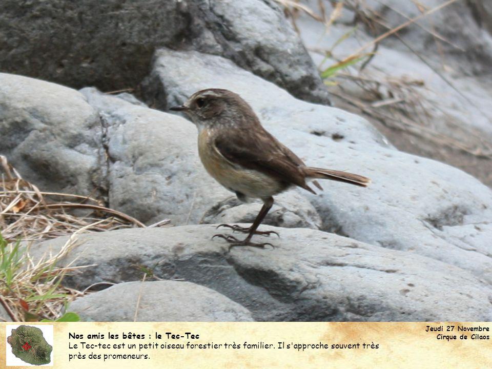 Nos amis les bêtes : le Tec-Tec Le Tec-tec est un petit oiseau forestier très familier. Il s'approche souvent très près des promeneurs. Jeudi 27 Novem