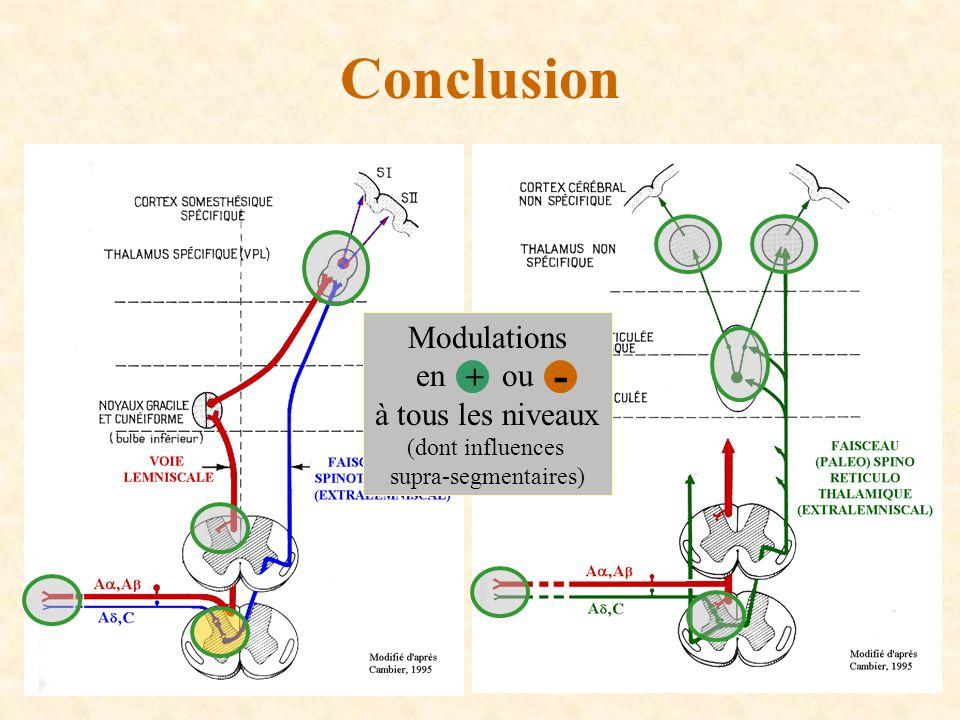 Conclusion Modulations en ou à tous les niveaux (dont influences supra-segmentaires) + -