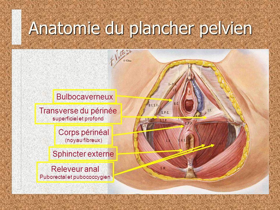 Anatomie du plancher pelvien Sphincter externe Transverse du périnée superficiel et profond Bulbocaverneux Corps périnéal (noyau fibreux) Releveur anal Puborectal et pubococcygien