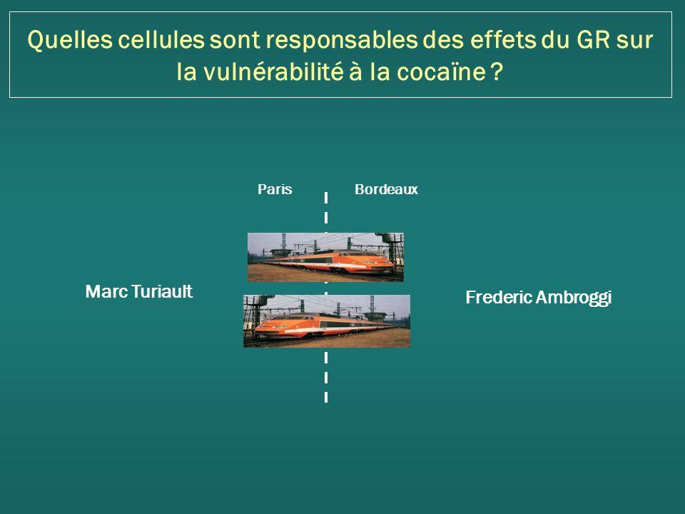 Quelles cellules sont responsables des effets du GR sur la vulnérabilité à la cocaïne .
