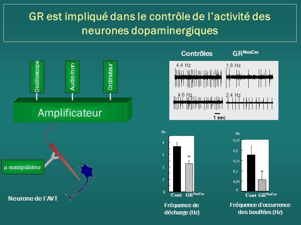 GR est impliqué dans le contrôle de lactivité des neurones dopaminergiques Neurone de lAVT Amplificateur Ordinateur Audio mon Oscilloscope µ manipulateur Fréquence doccurrence des bouffées (Hz) 0,05 0,1 0,15 0,2 0,25 0 1 ContGR NesCre 1 2 3 4 0 Cont GR NesCre Fréquence de décharge (Hz) 1.8 Hz 2.4 Hz 4.4 Hz 4.6 Hz 1 sec Contrôles GR NesCre Hz