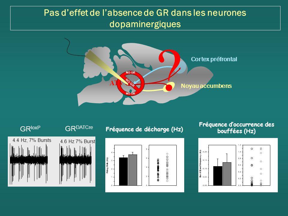 Pas deffet de labsence de GR dans les neurones dopaminergiques 4.4 Hz, 7% Bursts 4.6 Hz 7% Burst GR loxP GR DATCre Fréquence doccurrence des bouffées (Hz) Fréquence de décharge (Hz) Cortex préfrontal Noyau accumbens ATV .