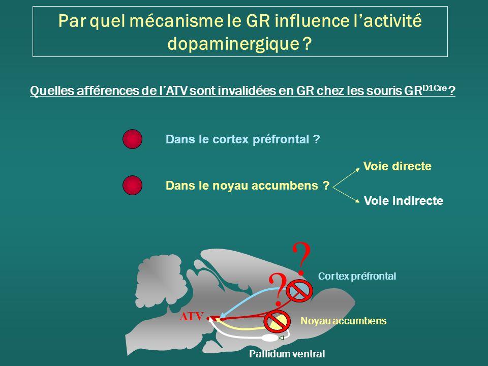 Par quel mécanisme le GR influence lactivité dopaminergique .